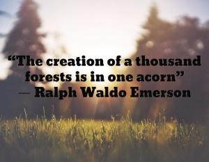 forestacorn